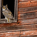 Great Horned by Jack Milchanowski