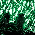 Great Horned Owl And Owlet by Jeff Swan