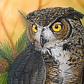 Great Horned Owl by Ethan Foxx