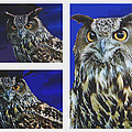 Great Horned Owl by Jay Milo