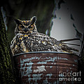 Great Horned Owl On Nest by Ronald Grogan