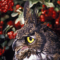 Great Horned Owl by Ron Sanford