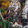 Great Horned Owl by Todd Bielby