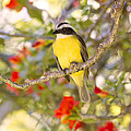 Great Kiskadee On A Branch by Peggy Collins