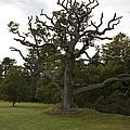 Great Oaks From Little Acorns Grow by Darren Burroughs