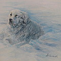 Great Pyrenees Dog by Ursula Brozovich