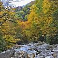 Great Smoky Mountains Creek 3 by Tina Cannon