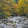 Great Smoky Mountains Creek 4 by Tina Cannon