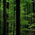 Great Smoky Mountains Forest by Frank Tozier