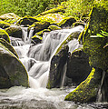 Great Smoky Mountains Tn Roaring Fork Motor Nature Trail Waterfall by Robert Stephens