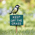 Great Tit On A Keep Off The Grass Sign by Tim Gainey