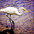 Great White Heron by Gray  Artus