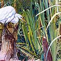 Great White Heron Sanctuary by Susan Duda