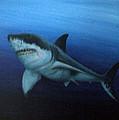 Great White Shark by Mackenzie Moulton
