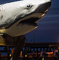 Great White Shark  by Imagery by Charly