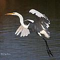 Greater Egret Landing by Tom Janca