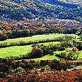 Green Acres by Faith Williams