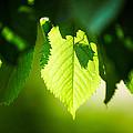 Green by Aleksejs Volkovs