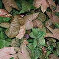 Green And Brown Leaves by Geoffrey McLean
