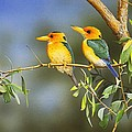 Green And Gold - Yellow-billed Kingfishers by Frances McMahon