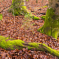 Green And Red Nature In The Forest by Matthias Hauser