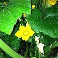 Green And Yellow by Iris Rivera