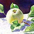 Green Apple by Irina Sztukowski