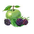 Green Apple With Blackberries by Irina Sztukowski