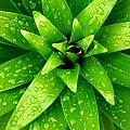 Green by Aza Johnson