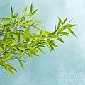 Green Bamboo by Priska Wettstein