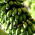Green Bananas by Christiane Schulze Art And Photography