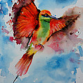 Green Bee Eater by Isabel Salvador