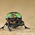 Green Beetle by Bradford Martin