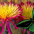 Green Butterfly On Fire Mums by Garry Gay