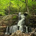 Green Canopy Above Laurel Falls by Adam Jewell