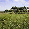 Green Cay Wetlands by Fran Gallogly
