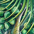 Green Coconuts  2  by Karin  Dawn Kelshall- Best
