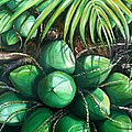 Green Coconuts  3  Sold by Karin  Dawn Kelshall- Best