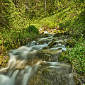Green Colors And A Stream Hdr by Mitch Johanson