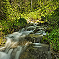 Green Colors And A Stream by Mitch Johanson