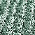 Green Cornfield by Dan Sproul