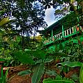 Green Costa Rica Paradise by Andres Leon