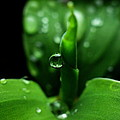 Green-dew by Rosvin Des Bouillons