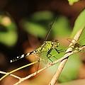 Green Dragonfly by Cynthia Guinn