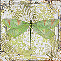 Green Dragonfly On Vintage Tin by Jean Plout