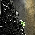 Green Droplet  by Chris Berry