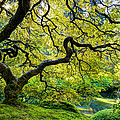 Green by Dustin  LeFevre