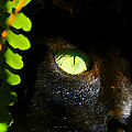 Green Eyed Black Cat by David Lee Thompson