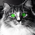 Green Eyed Elvis by Frank Larkin