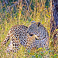 Green Eyed Leopard by Evan Peller